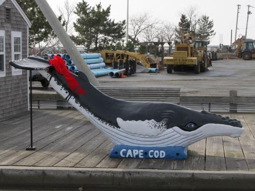 Cape Cod Whale