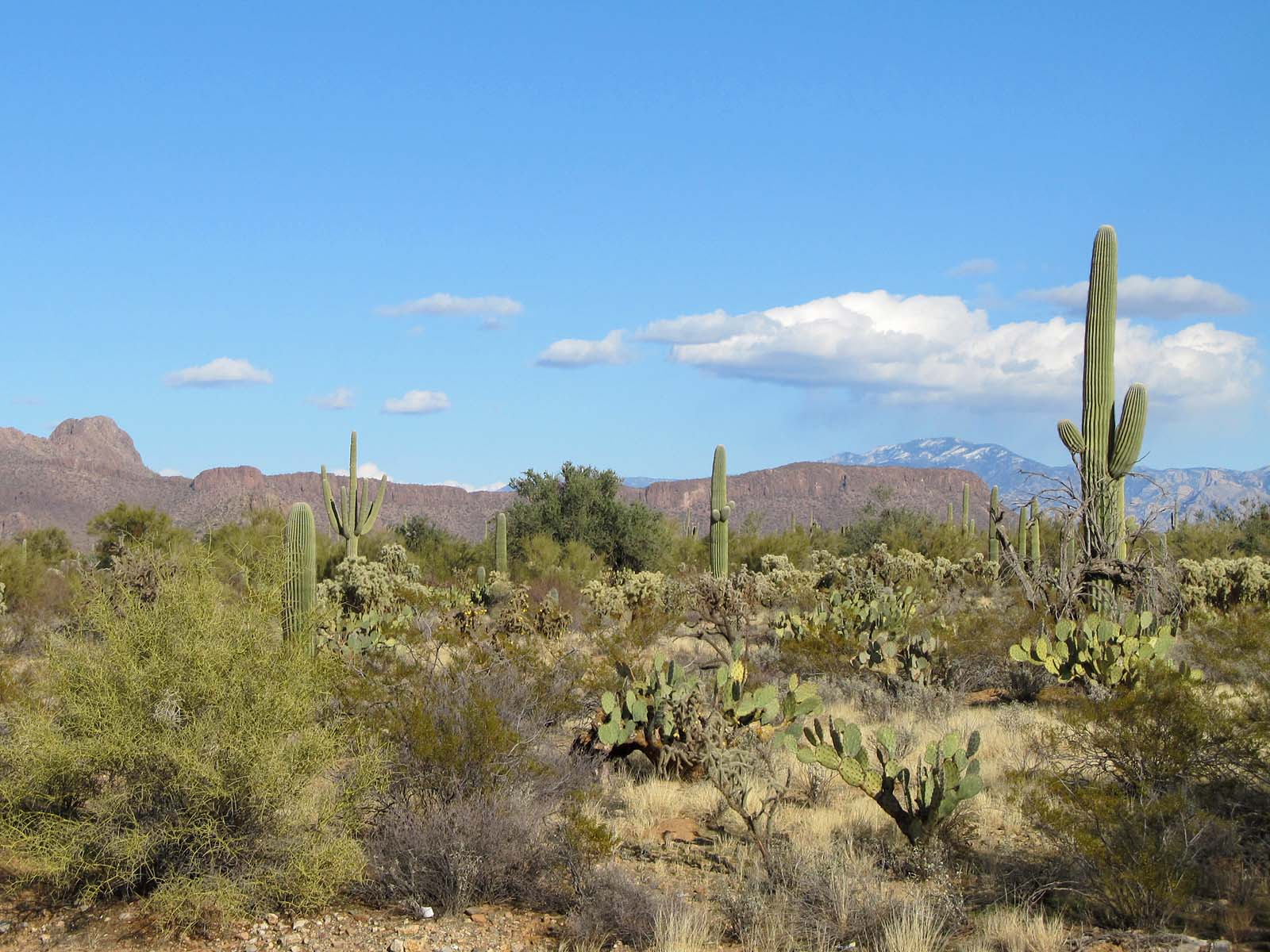 Sonoran deserts More information