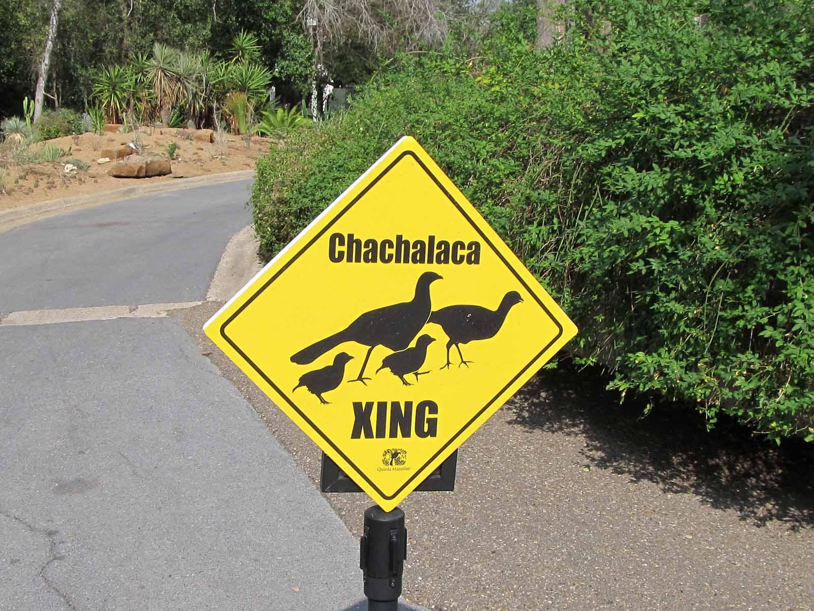 Chacha Crossing
