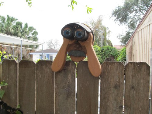 Nosy Neighbor