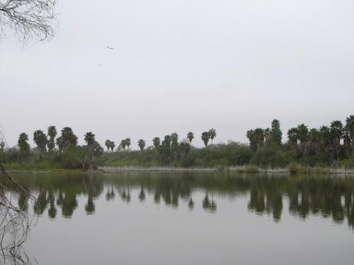 Rio Grande at Bentsen