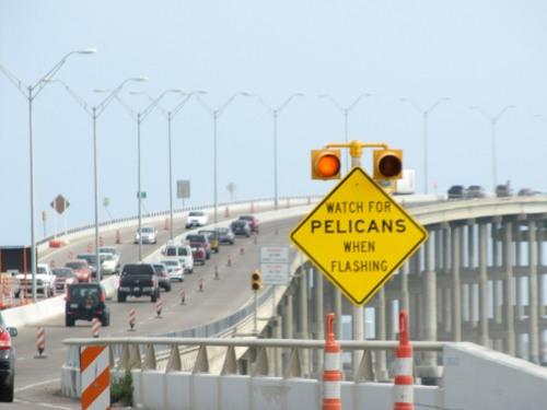 Watch for Pelicans