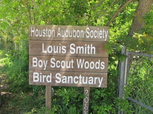 Boy Scout Woods