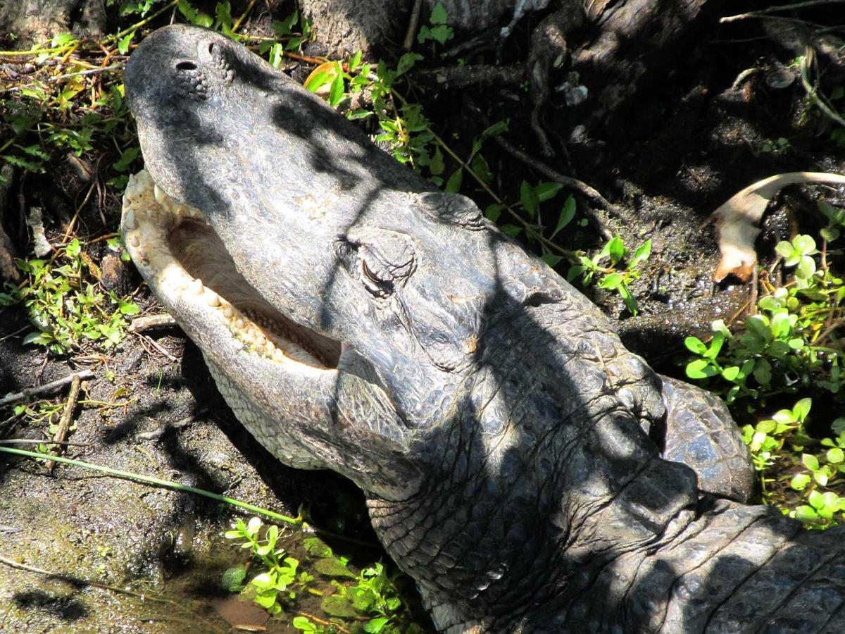 everglades national park essay
