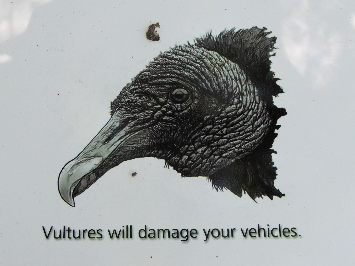 Vultures will damage your vehicles