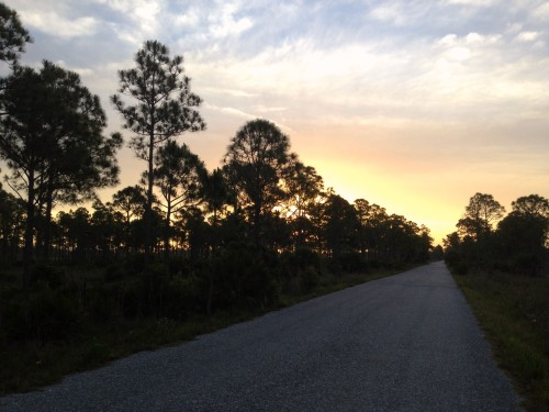 Dawn in Saw Palmetto Slash Pine Forest