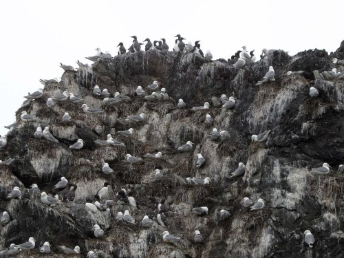 Seabird colony rock
