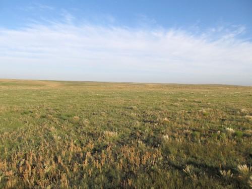 Short Grass Prairie at Dawn