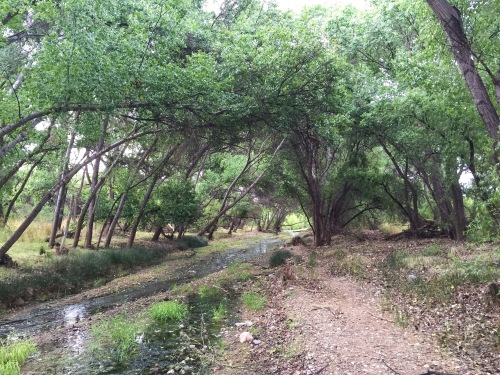 Cienega Creek Preserve